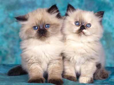 20 интересни факта за котките, които не знаете