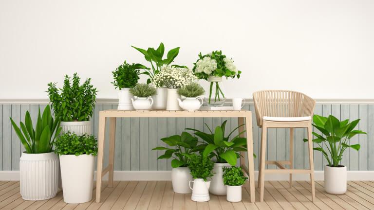 стайни-растения